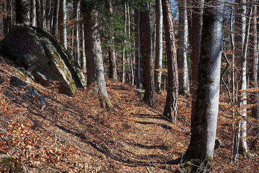 Forest Path, Away, Nature, Spring, Autumn, Trees