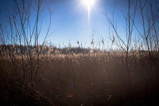 Reed, Swamp, Nature, Trees, Landscape, Path, Light