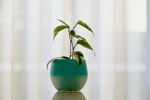 Plant, Pot, Room, Curtain, Silent, Afternoon, Pure