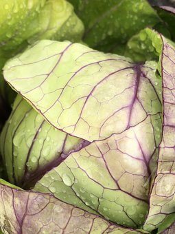 Cabbage, Raindrops, Vegetable, Green, Horticulture