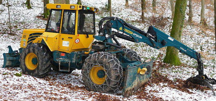 Nature, Forest, Winter, Snow, Timber Harvesting