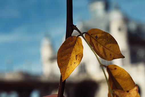 Leaves, Color, Autumn, Nature, Tree, Plant, Yellow