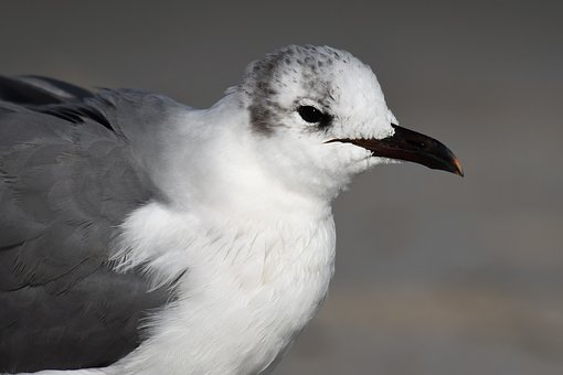 Florida, Winter, Seagull, Bird, Water, Animal World