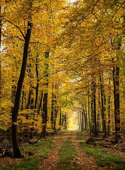 Autumn, Forest, Fall Foliage, Autumn Light, Forest Path