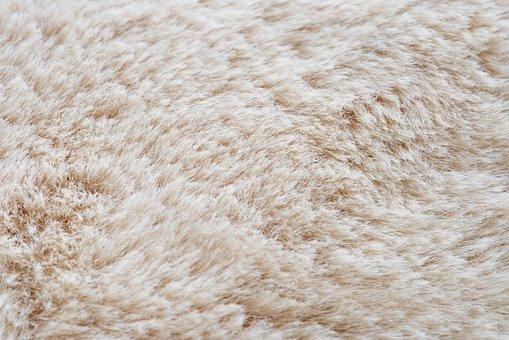 Animal, Backdrop, Background, Blank, Carpet, Color