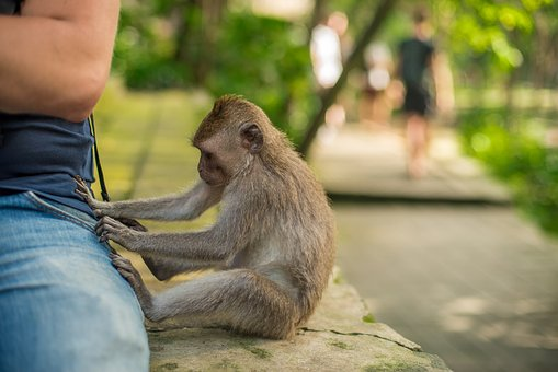 Bali, Indonesia, Monkey, Park, Beggar, Steals, Man