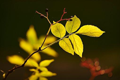 Twig, Leaf, Vein, Pattern, Foliage, Growth, Bright