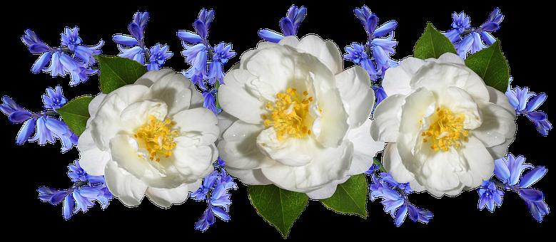Flowers, Camellia, Bluebells, Arrangement, Garden