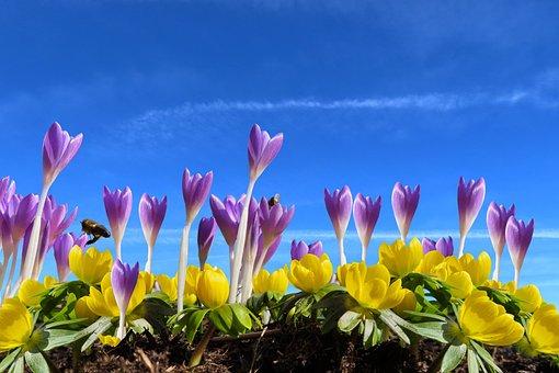 Nature, Landscape, Flowers, Season, Spring, Crocus