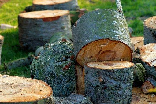 Tree, Front Yard, Like, Discs, Firewood, Spring, Rush