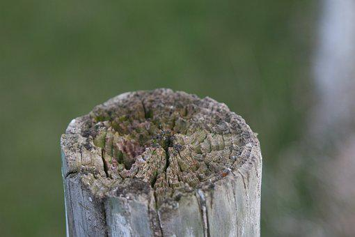Spring, Nature, Wood, Green, Fence Post, Fence