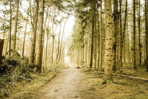 Forest, Monochrome, Nature, Trees, Landscape, Fantasy