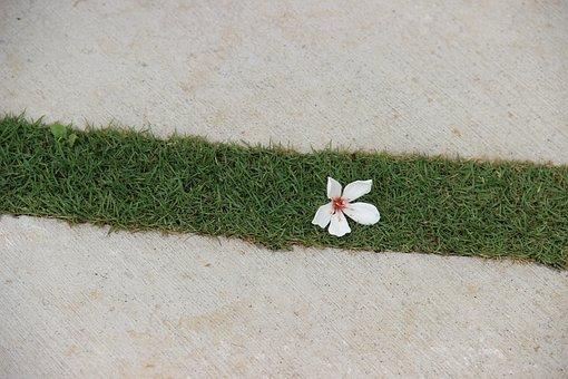 Tung Oil Tree, Flower, Lawn