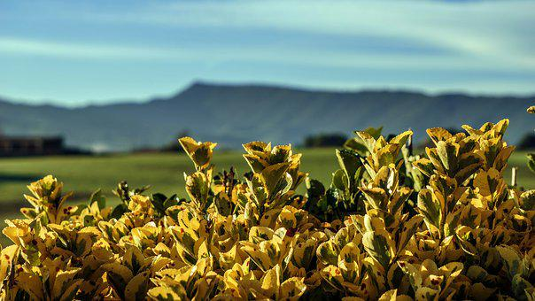 Landscape, Nature, Leaf Litter, Yellow, Mountains