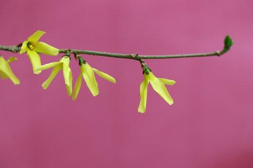 Flowers, Flower, Yellow, Background, Minimalism, Nature
