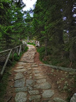 Green, Nature, The Silence, The Path, Forest, Landscape