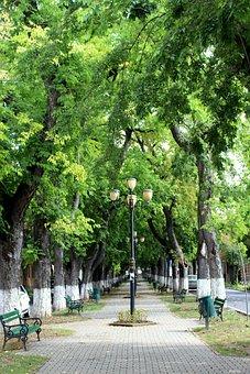 Park, Targu Mures, Romania, Summer, Landscape, Nature