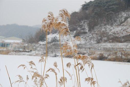 Republic Of Korea, Winter, Country, Snow, Korea