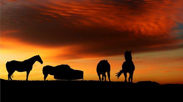 Sunset, Horses, Nature, Landscape, Summer, Silhouette