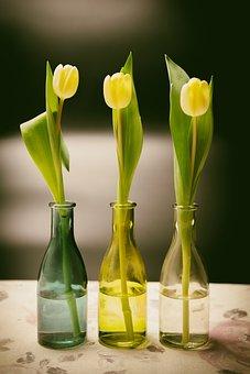 Tulips, Flowers, Spring, Easter, Bottles, Map, Postcard