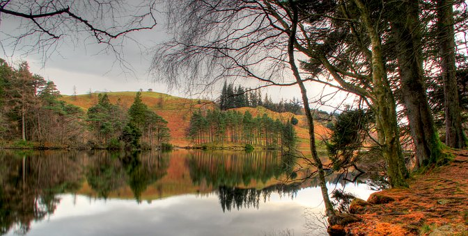 Tree, Lake, Water, Nature, Trees, Landscape, Reflection