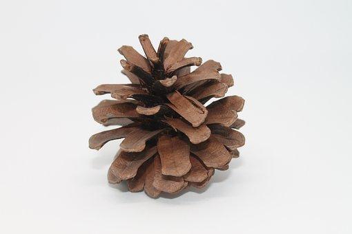 Pine Cones, Macro, Close Up, Brown, Wood, Decoration