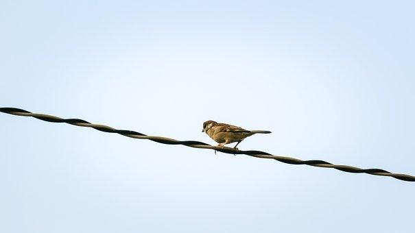 Sparrow, Sank, Beans, Sharing, Bird