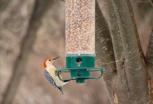 Bird Feeder, Backyard, Birdwatching, Bird, Woodpecker