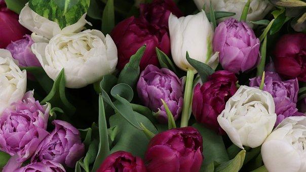 Tulips, Bouquet, Spring, Tulip, Flower, Bloom, Garden