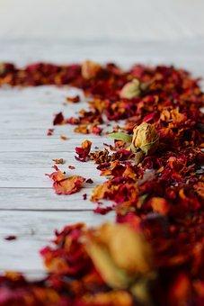 Trockenblume, Plant, Blossom, Bloom, Nature, Petals