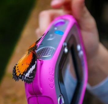 Butterfly, Camera, Child, Close Up, Photograph, Purple