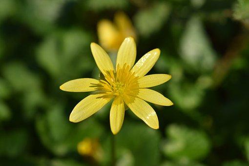 Flower, Flower Button Gold, Petals, Yellow Flower