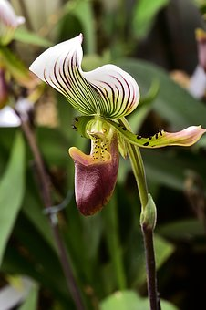 Flower, Flowers, Orchids, Yellow, Plants, Nature
