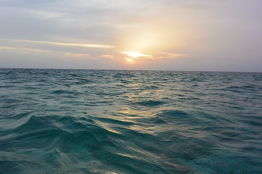 Ocean, Sea, Turquoise, Wave, Beautiful, Horizon, Fish