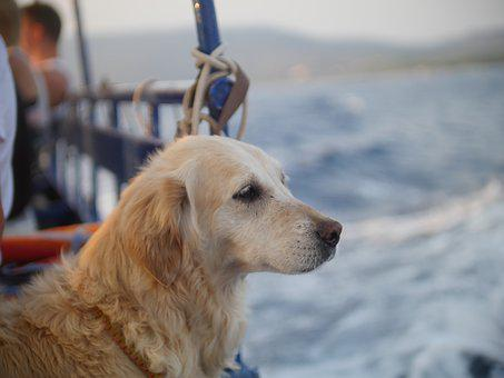 Dog, Sea, Cres, Water, Pet, Sky, Nature, Ocean
