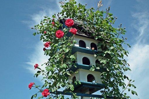 Birdhouse, Roses, Flowers, Creeper, Red, Garden, Summer