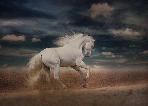 White Horse, Running, Gallop, Desert Run, Horse