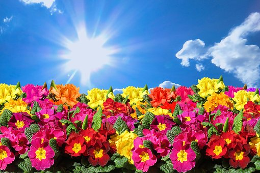 Nature, Landscape, Spring, Flowers, Sky, Clouds, Sun