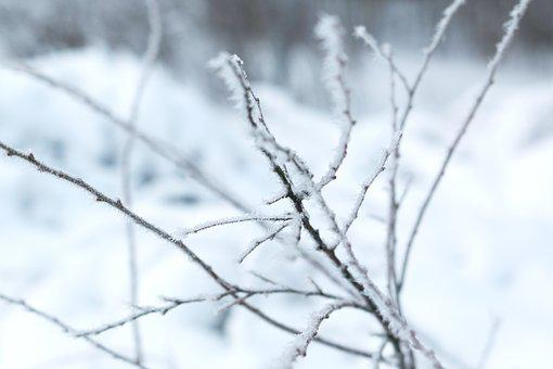 Brunch, Winter Landscapes, Winter, Snow, Snow Crystals