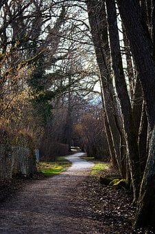 Away, Path, Spring, Autumn, Trail, Avenue, Forest Path