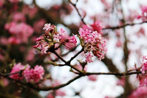 Flowers, Pink Flowers, Hopper Flowers, Tree, Aesthetic
