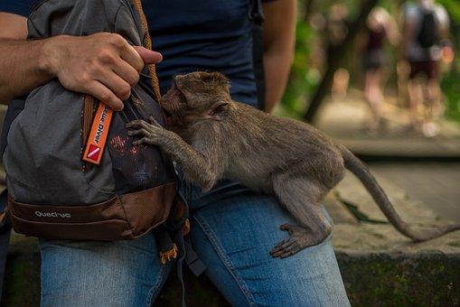 Indonesia, Bali, Park, Reserve, Monkey, Wild, Man