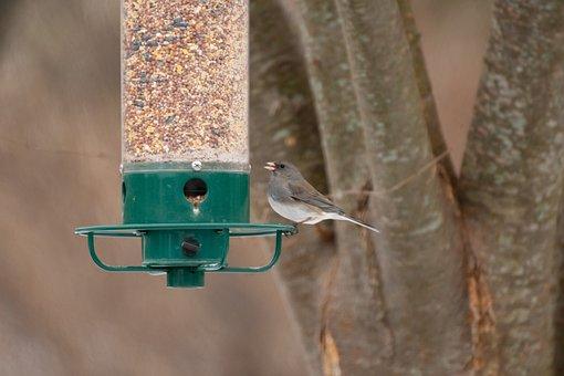 Bird Feeder, Backyard, Wildlife, Birdwatching, Bird