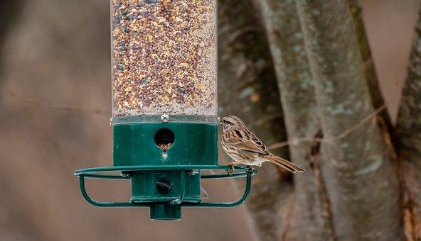 Bird Feeder, Back Yard, Birdwatching, Feeder, Feather