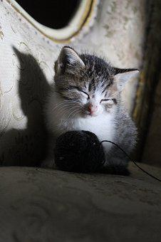 Animals, Kittens, Cat, Cute, Beautiful, Small, Special