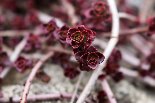 Flowers, Flower, Violet, Nature, Aesthetic, Bush