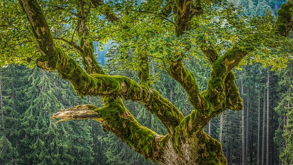 Chestnut, Moss, Forest, Aesthetic, Old, Nature