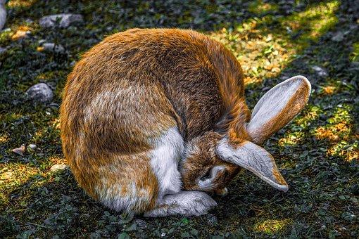 Hare, Rabbit, Animal World, Close Up, Furry, Charming