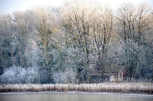Winter, Landscape, Cold, Nature, Trees, Forest, Pond