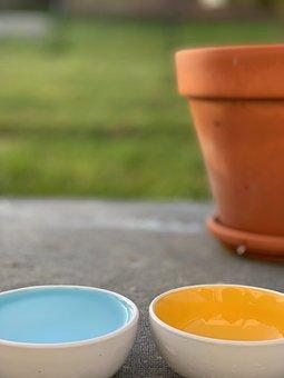 Bowl, Flowerpot, Grass, Prado, Lawn, Pet, Pets, Dog